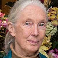 Chimpanzee expert Dr Jane Goodall