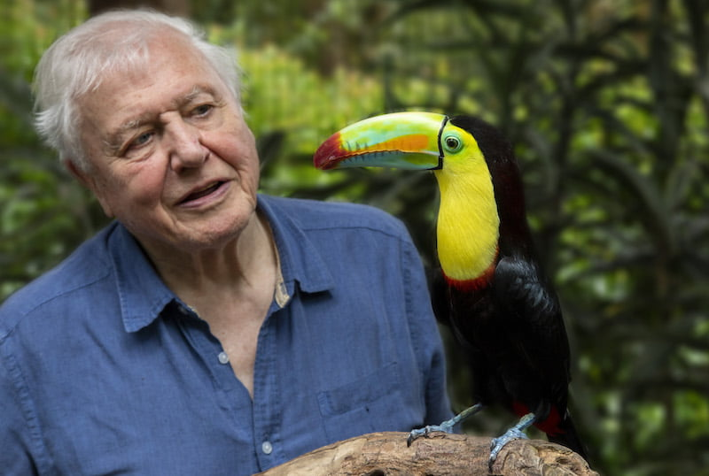 BBC Announces Brand New Series Presented by David Attenborough, LIFE IN COLOUR