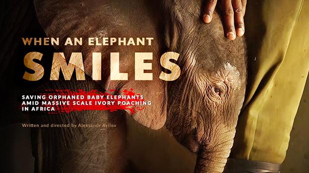 When an Elephant Smiles