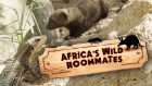 Africa's Wild Roommates - How Animals Share Bed and Board