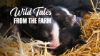 Wild Tales from the Farm