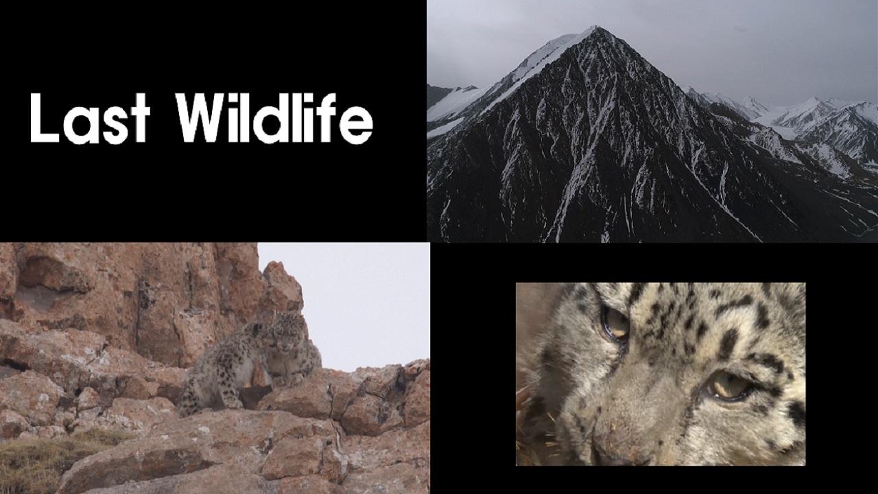 The Last Wildlife