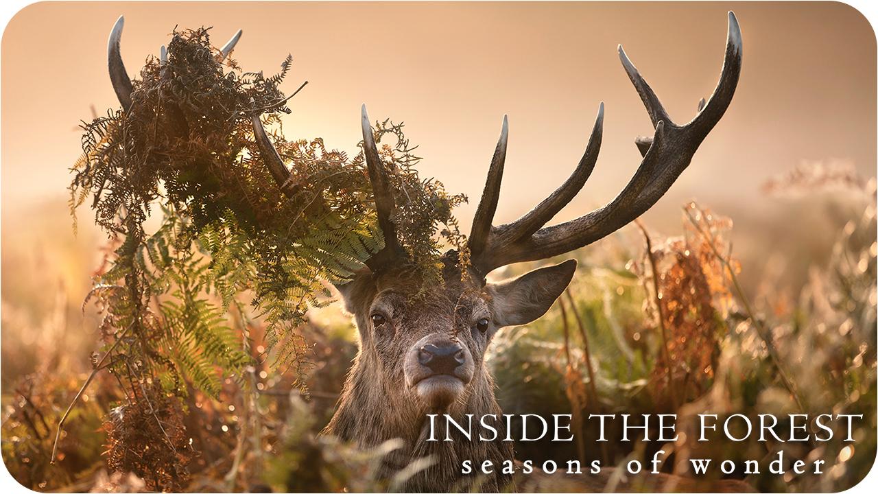 Inside the Forest: Seasons of Wonder