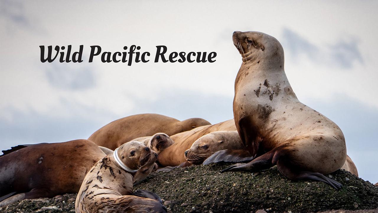 Wild Pacific Rescue