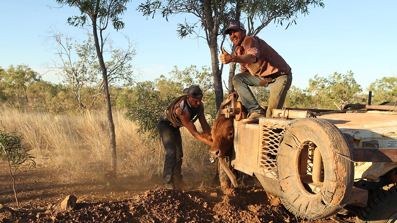 Aussie Bull Catchers